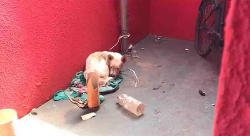 Outro cachorro foi resgatado com vida e levado ao CCZ. Foto: DECAT/Reprodução