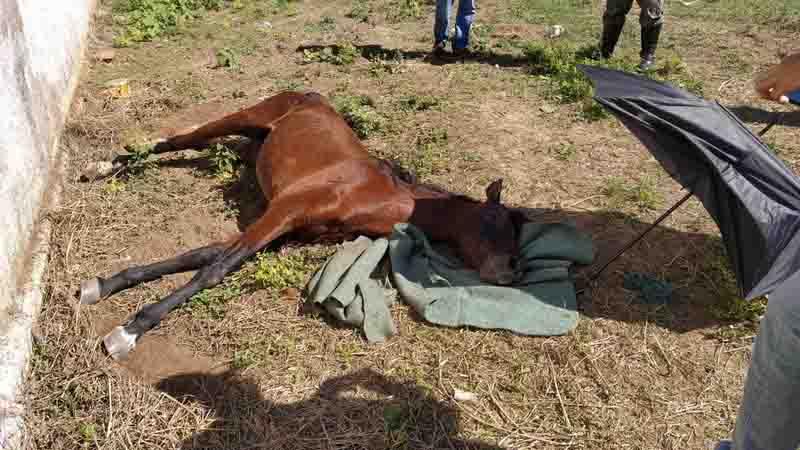 Cavalo morre após ser abandonado e tutor responderá por maus-tratos, em Aquidauana, MS