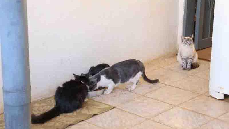 Animais criados por protetora foram resgatados de situaçãod e violência e reabilitados. Foto: Paulo Francis