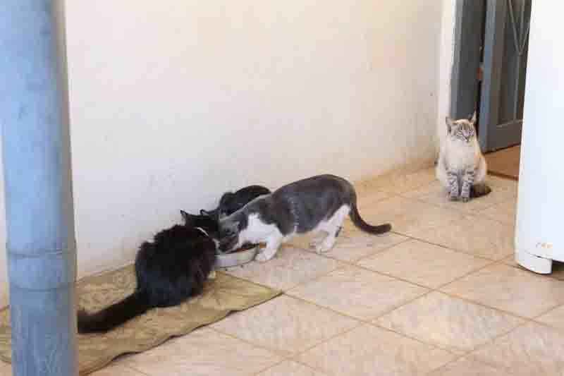 Moradora reclama de vizinho que joga naftalina e até bombas contra gatos, em Campo Grande, MS