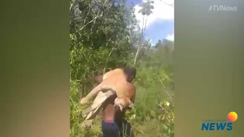 Vídeo mostra homem jogando onça-parda em rio, após ser morta em armadilha, em MS