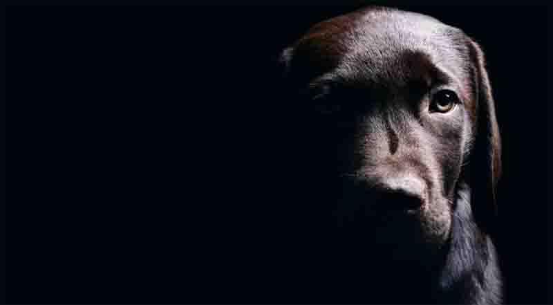 Gerente de posto espanca cachorro a golpes de enxada em Várzea Grande, MT