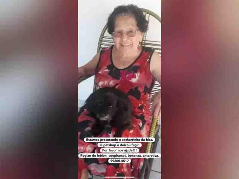 Pet shop deixa dois cachorros fugirem em menos de um mês, em Campo Grande, MS