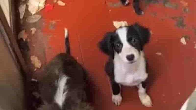 Cães foram resgatados de casa abandonada. Foto: Reprodução