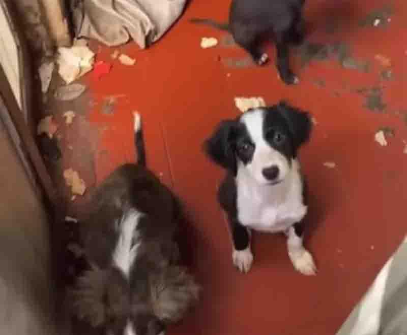 Dono de casa onde mais de 30 cães foram encontrados abandonados é intimado pela polícia em MT