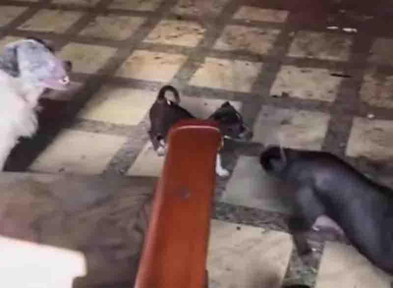 Filhotes e adultos estavam presos em casa. Foto: Reprodução