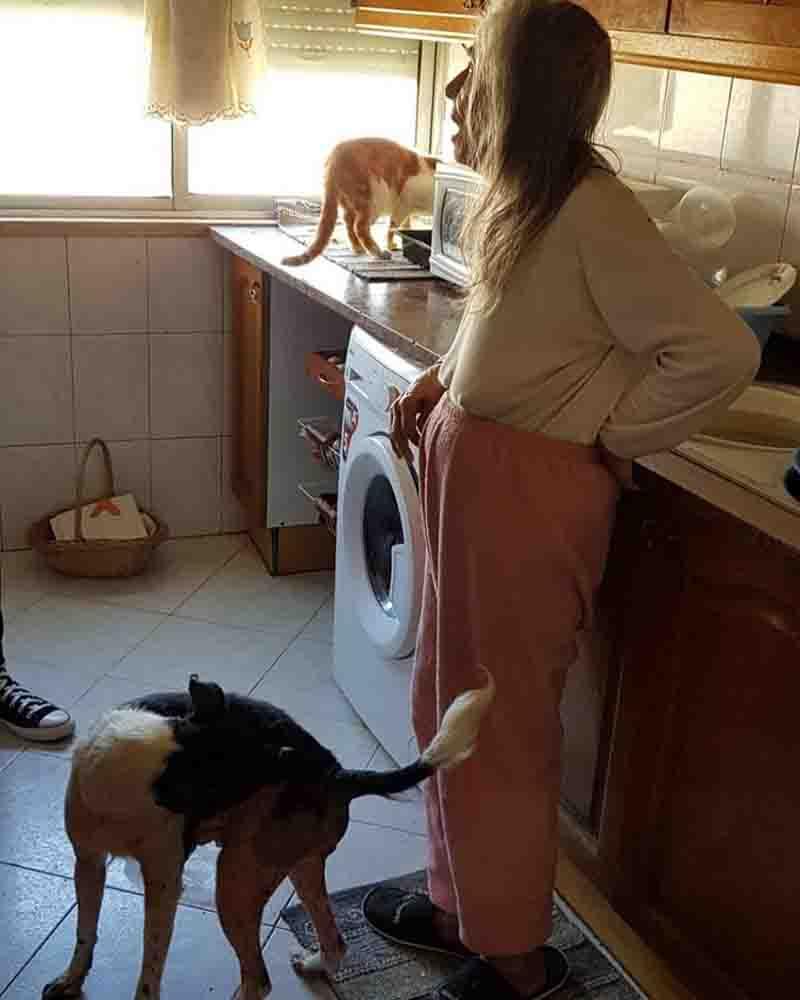 Mulher emociona ao implorar para que não lhe tirem os animais: 'Há resgate animal. Hoje foi resgate humano'