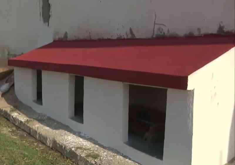 Famílias criam abrigos para acolher animais de rua no período de frio em Campina Grande, PB