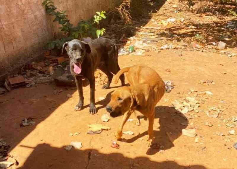 Polícia prende homem por deixar cachorros em casa abandonada por mais de 1 ano em Formosa, GO