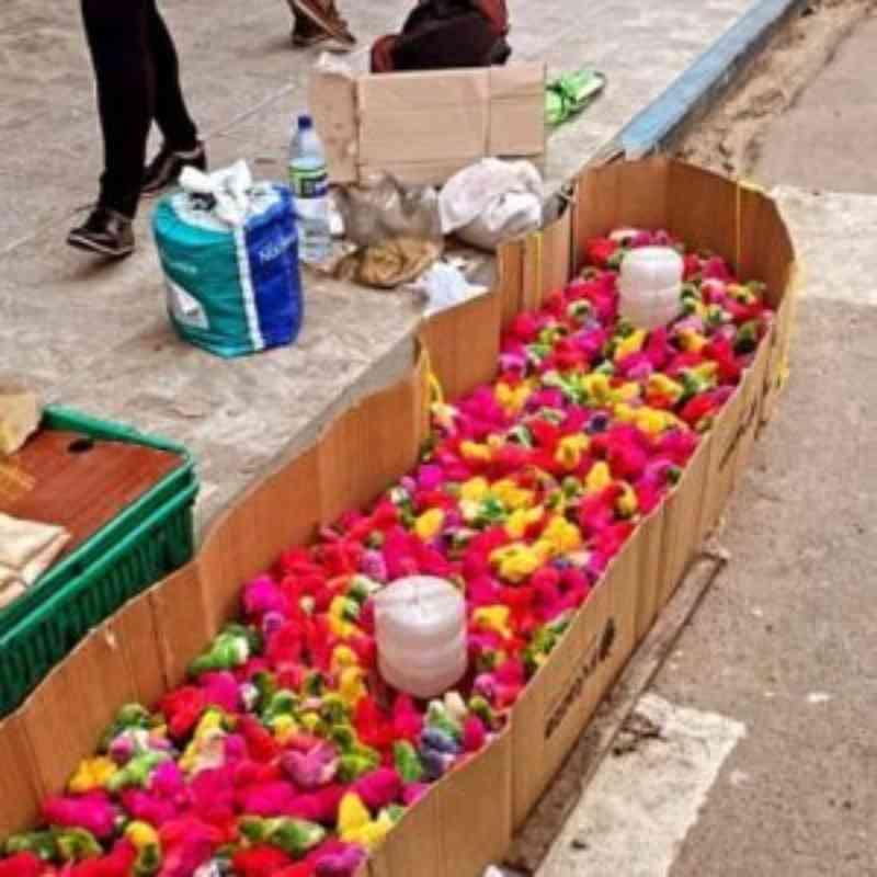 Polícia apreende 500 pintinhos submetidos a maus-tratos no Centro de Serra Talhada, PE