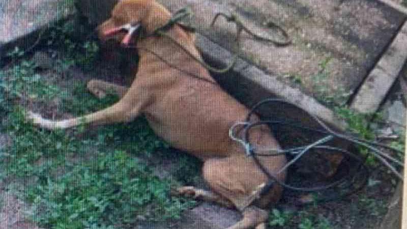 Cachorro com os cabos que utilizam para a realização da Eutanásia (Foto: Reprodução/Instagram)