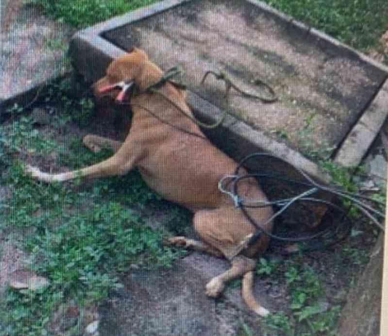 Cachorros estariam sendo eletrocutados no Centro de Zoonoses de Barras, PI