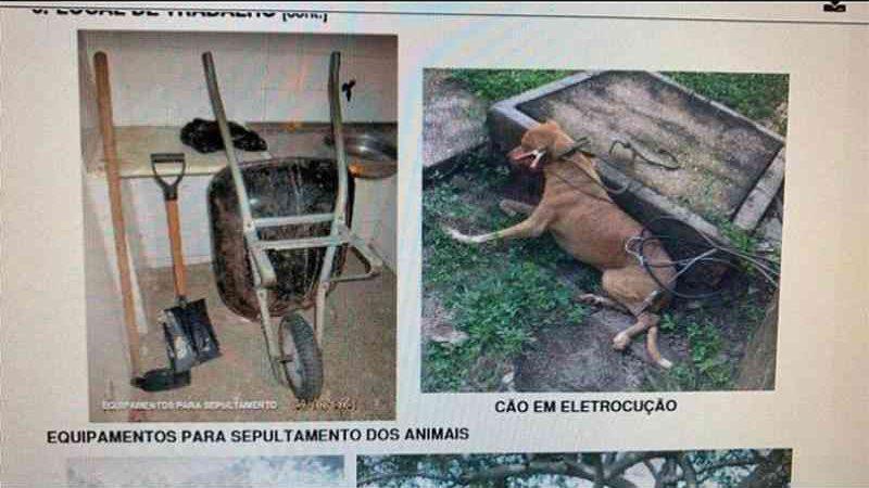 Mais de um cão teria sido morto por choque (Foto: divulgação PC-PI)