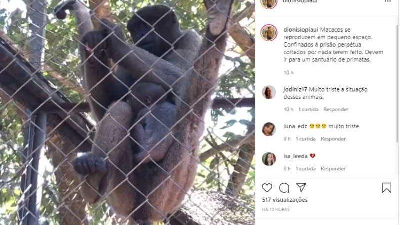 Macaco que nasceu no Zoobotânico de Teresina (PI) deve ser levado para santuário de primatas