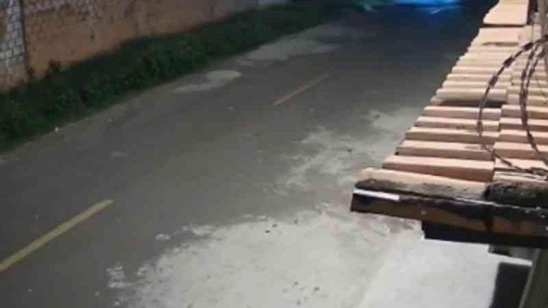 Maus-tratos: motorista atropela cão propositalmente e foge em Teresina, PI