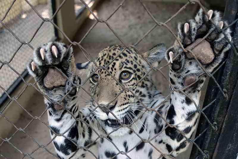 Ministério Público pede suspensão da transferência de animais do Zoobotânico de Teresina, PI