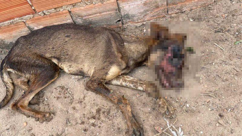 Cadela foi internada em uma clínina na zona leste de Teresina (Foto: Divulgação)