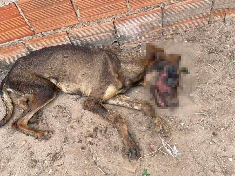 Cão abandonado com rosto em carne viva é resgatado por vereadora em Teresina, PI
