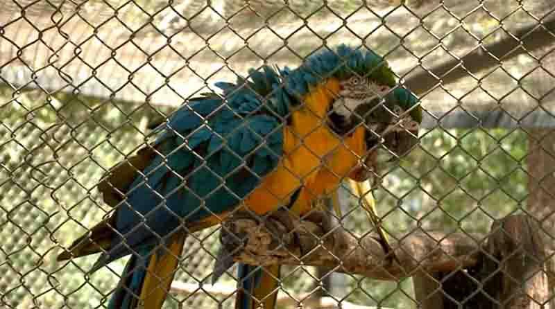 Leoa e família de macacos-barrigudos devem ser primeiros a ser transferidos do Zoobotânico de Teresina, diz Semar