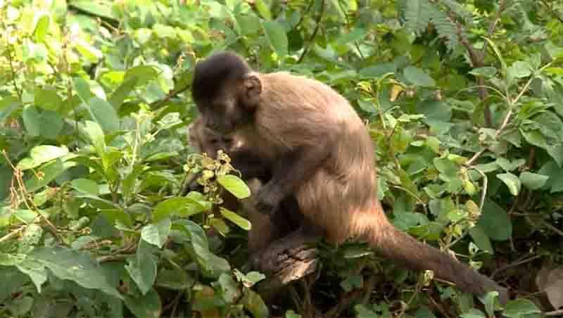 Semar-Piauí trabalha em protocolo de transferência de animais. Foto: TV Clube
