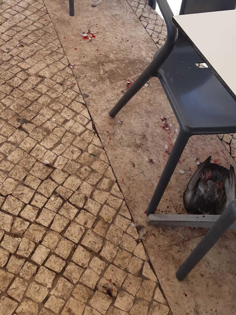 Homem esmurra e decapita pombo que roubou batata frita ao filho