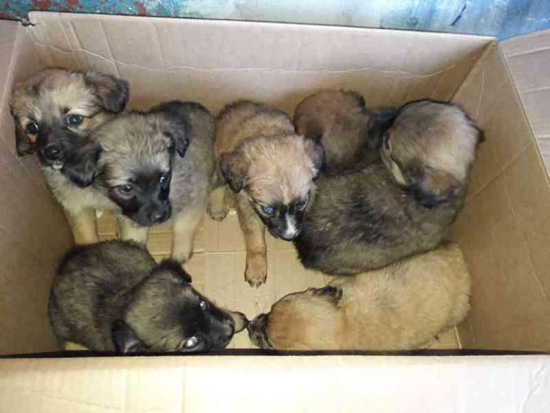 Mulher mente que animais foram abandonados em Apucarana, PR