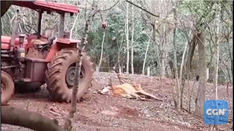 Duas pessoas são acusadas de maus-tratos por não alimentar animais na área rural de Cascavel, PR