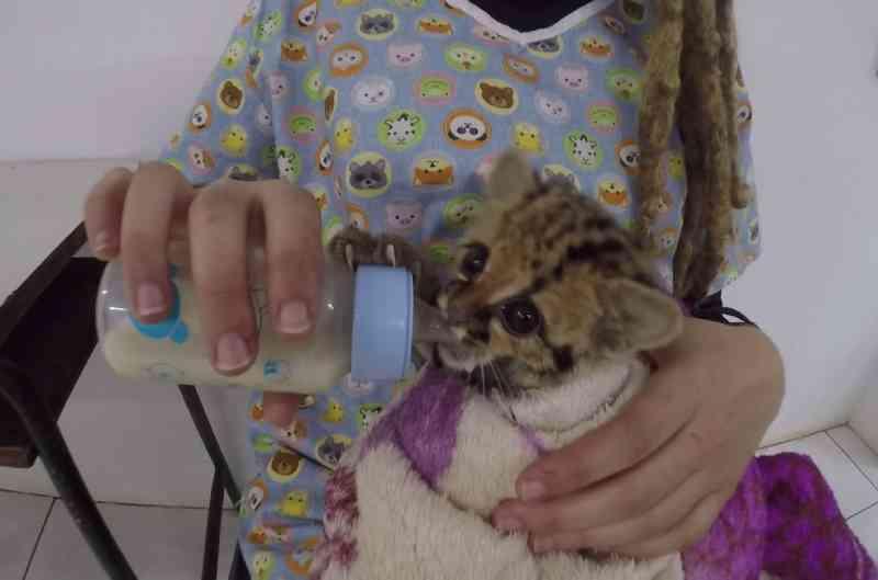 Animais selvagens feridos ou resgatados recebem cuidados especiais para o frio, no Paraná