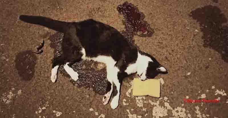 Homem joga gato de sacada de sobrado por ter deitado na cama do filho, em Foz do Iguaçu, PR