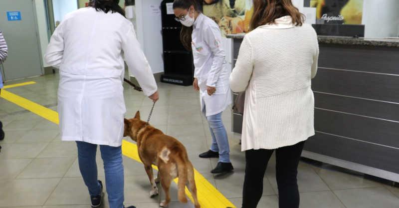 Londrina (PR) ganha 'hospital de reabilitação' para animais vítimas de maus-tratos