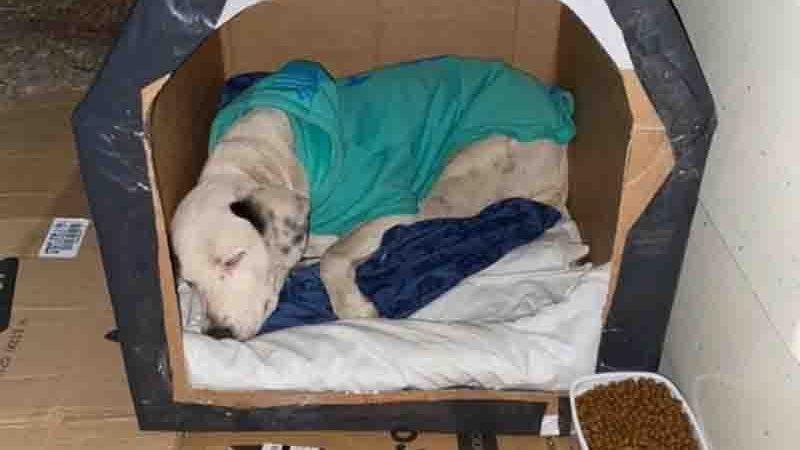 Voluntários deixaram casinhas, ração e cobertores para os animais de rua. Foto: Divulgação