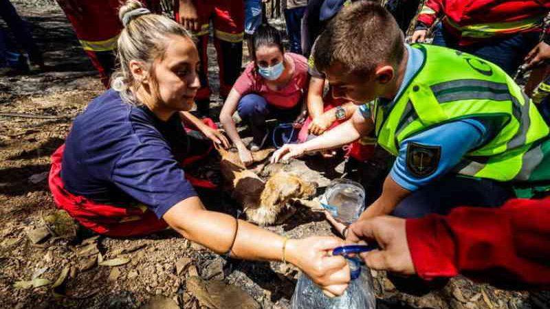 A Câmara de Santo Tirso registou 73 animais mortos, 69 cães e quatro gatos. Foto: Arquivo/Miguel Pereira/Global Imagens