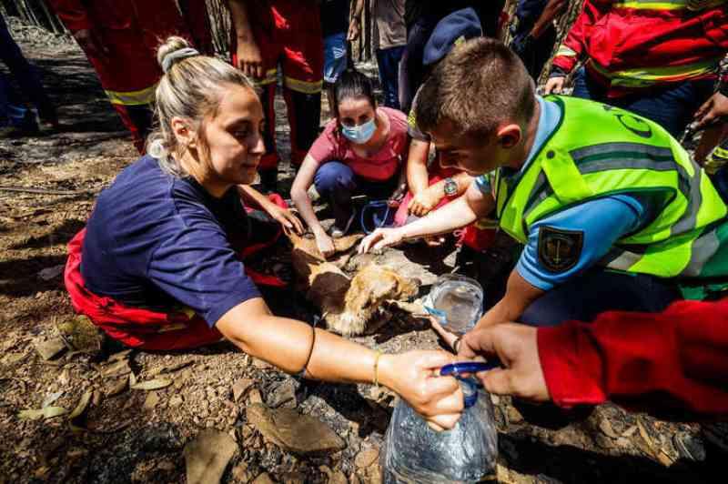 Portugal: processo-crime de animais mortos em incêndio em Santo Tirso está 'parado'