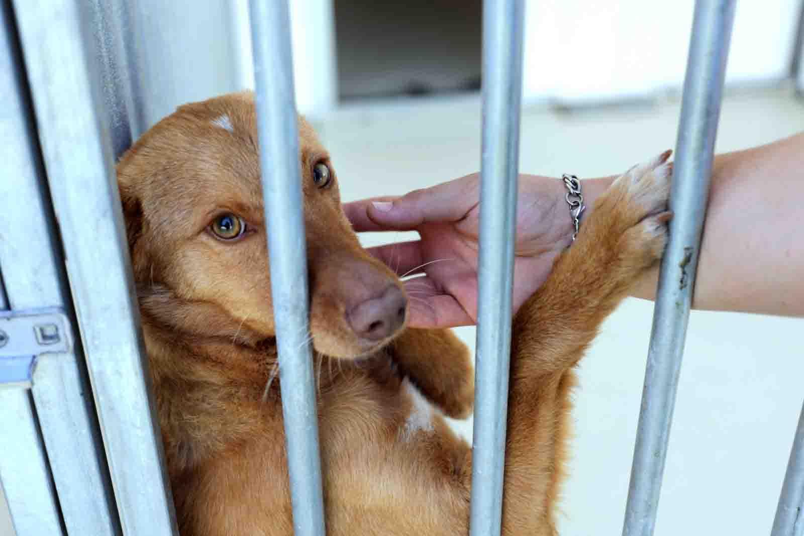 Veterinários portugueses querem levantamento nacional de animais abandonados