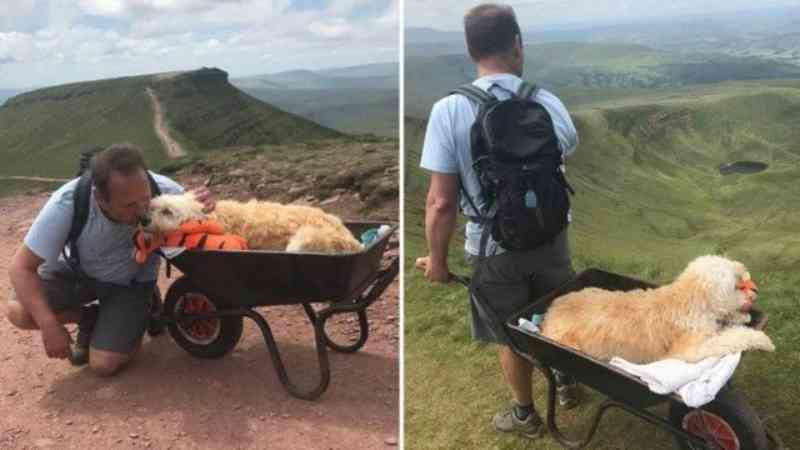 Homem se despede do cão doente na montanha preferida do animal. Foto: Reprodução/Facebook