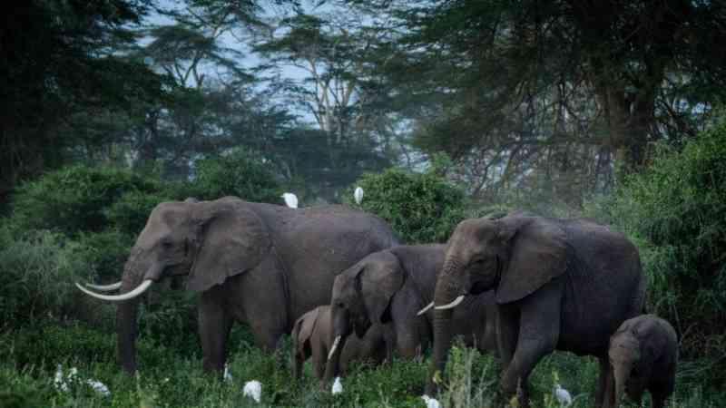 Quênia preocupado com o plano do Reino Unido de reintroduzir manada de elefantes na natureza