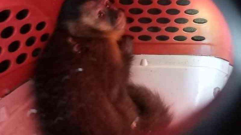 Justiça mantém prisão preventiva de quarteto flagrado com animais silvestres em Porto Real, RJ