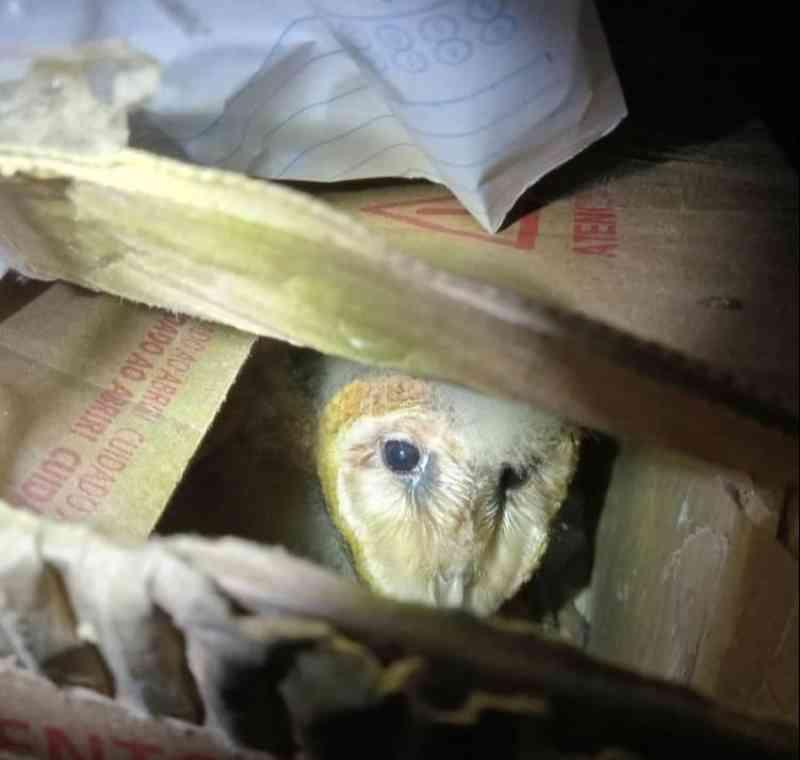 Os animais foram encaminhado ao Centro de Triagem de Animais Silvestres (CETAS) de Seropédica (Foto: PRF)