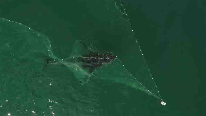 Baleia-jubarte fica presa em rede de pesca em Arraial do Cabo, RJ, mas é libertada e retorna à rota migratória