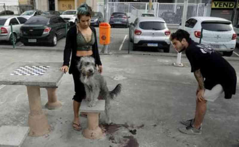Mayume e Fabian Sanches com cadela que foi agredida por policial, que ainda matou outro animal do casal. Foto: Gabriel de Paiva / Agência O Globo