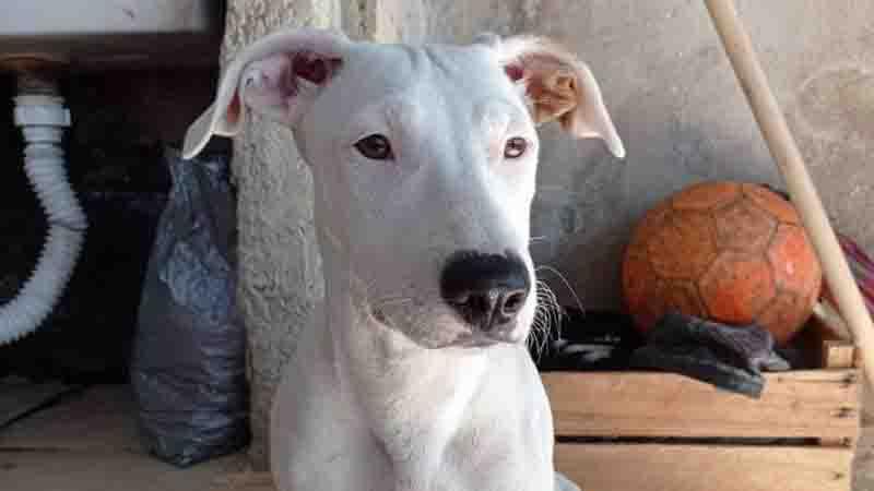 'Vamos até o fim. Queremos toda justiça do mundo', diz artista circense que perdeu cadela morta por policial