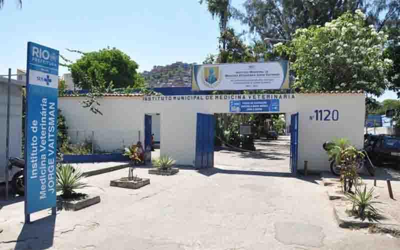 Instituto veterinário doa insumos e animais ficam sem cirurgia de emergência no RJ
