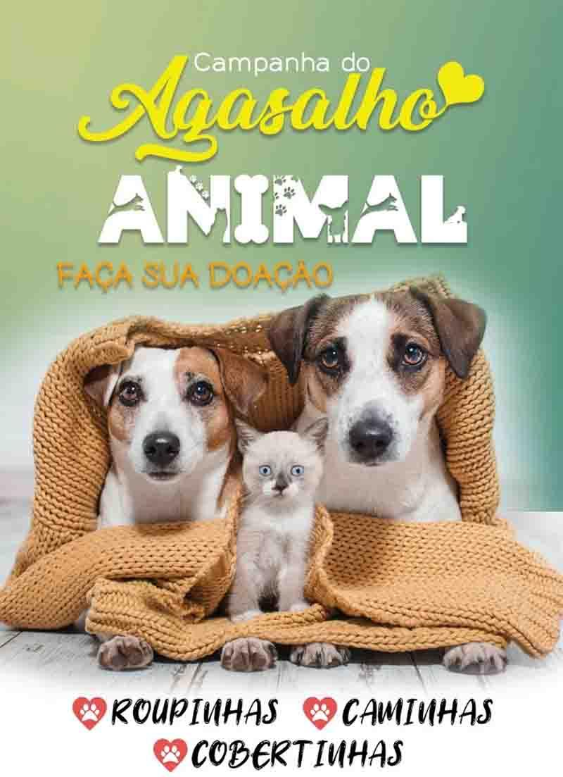 Campanha arrecada agasalhos para pets em Volta Redonda, RJ