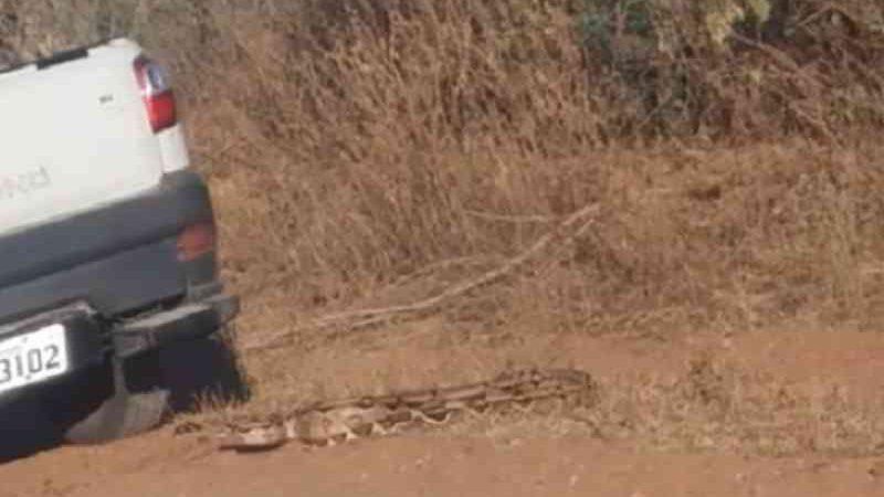 Polícia investiga motorista que tentou matar cobra manobrando o carro por cima do animal em Mossoró. — Foto: Reprodução