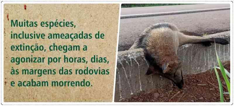 Animais de Rondônia agonizam até a morte por atropelamento nas estradas
