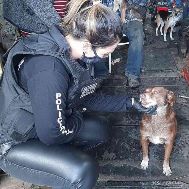 Homem é preso por manter cães e gatos sem comida e machucados presos na corrente, em Canoas, RS