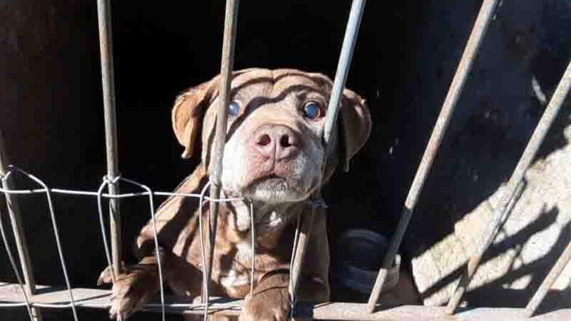 Cerca de 15 animais são abandonados diariamente em Caxias do Sul, RS