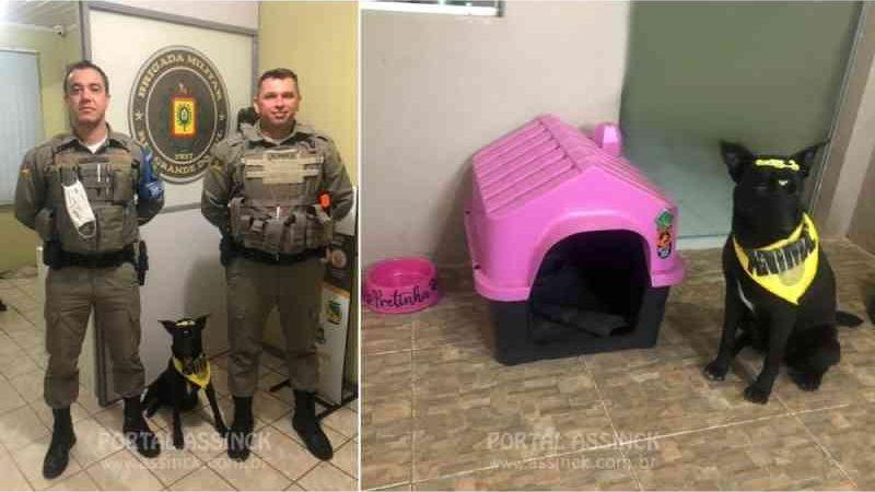 Brigada Militar de Santa Bárbara do Sul (RS) adota cachorro abandonado
