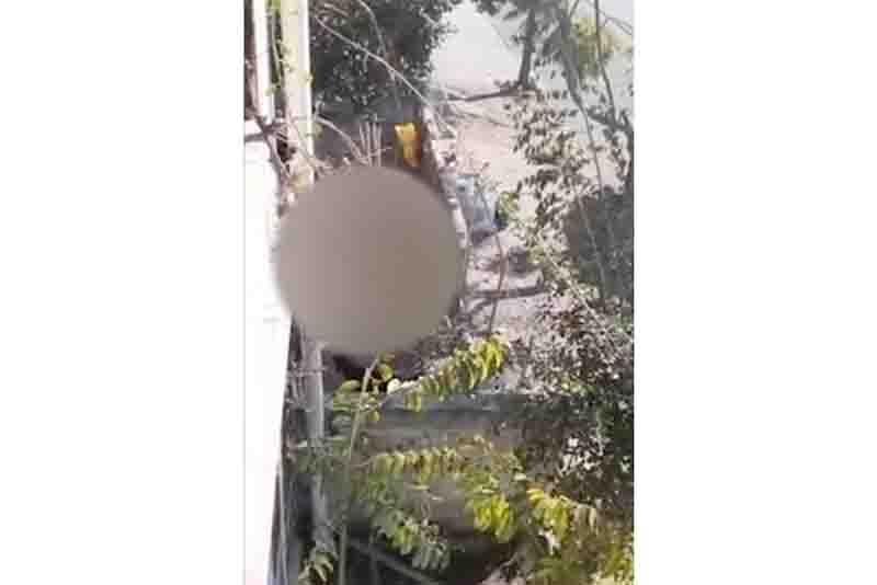 Vídeo que circula nas redes sociais mostra mulher agredindo cães a pauladas em Caxias do Sul, RS