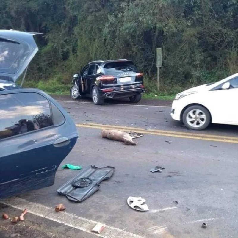 Veado morre atropelado em rodovia no RS
